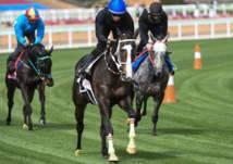 السعودية: تنظيم أغلى بطولة عالمية في سباقات الخيل