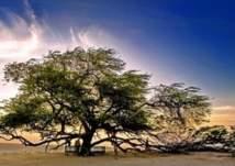 معجزة حيّة في قلب صحراء البحرين.. وهذا سرها؟