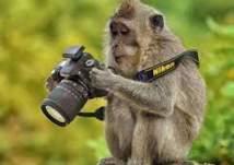 لقطات طريفة.. قرد يخوض تجربة التصوير بكاميرا احترافية