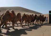إشارة مرور وسط الصحراء.. للجمال فقط! (صور)