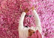شاهد.. صحراء الطائف تتحول لمدينة ورود في رمضان