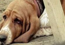 """شاهد.. """"كلبة"""" تنتظر صاحبها المريض أمام المستشفى لمدة اسبوع"""