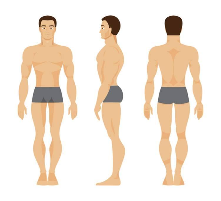 أنواع الأجسام: دليل الأكل والتمارين المناسبة حسب نوع جسمك