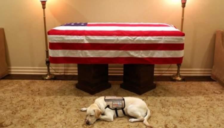 """الكلب """"سالي"""" يودع """"بوش الأب"""" في لقطة انسانية"""