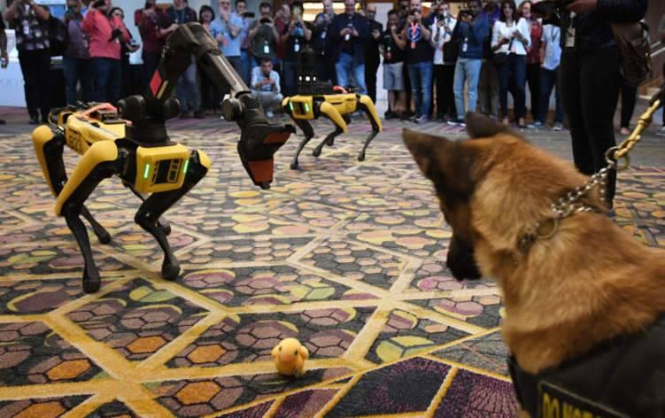 الكلب الروبوت «سبوت» في الأسواق ب75 ألف دولار