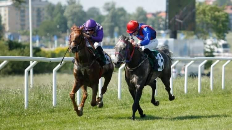 """الخيول الأصيلة تتنافس على """"كأس زايد"""" و""""أم الإمارات"""" عالمياً"""