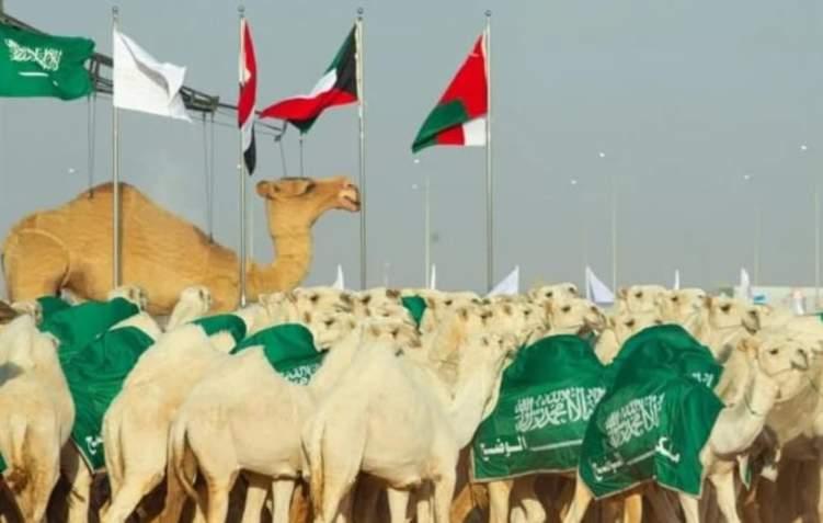 """""""الهجانة الملكية"""" في جميع المراسم ..قريباً في السعودية"""