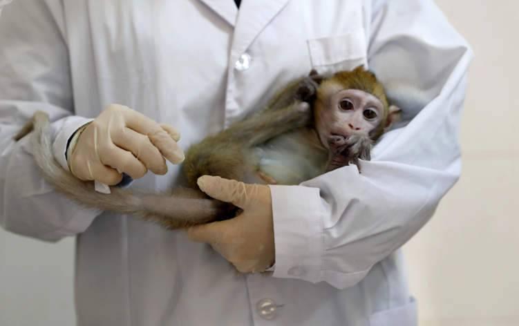 """تسجيل أول وفاة بشرية بـ """"الفيروس القردي"""""""