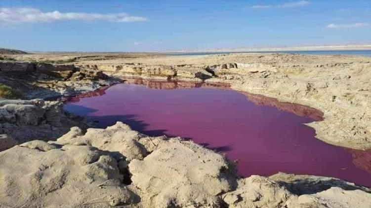 بحيرة وردية في قلب البحر الميت.. ما سرها؟