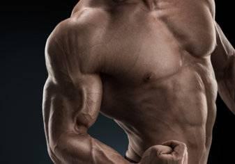عدد عضلات جسم الانسان وأنواعها