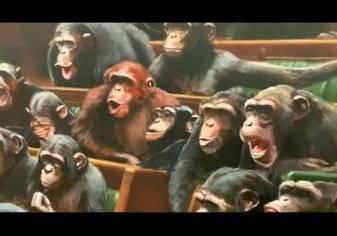 """شاهد.. """"الشامبانزي"""" في البرلمان البريطاني!"""