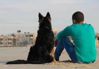 دراسة .. امتلاك كلب قد يطيل العمر!