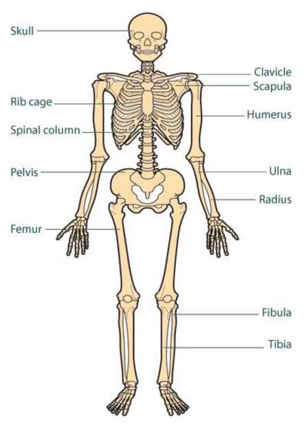 طباعة جسم الإنسان والأعضاء البشرية بتقنية 3D (صور)