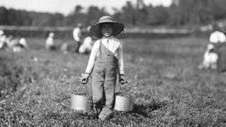 الزراعة.jpg