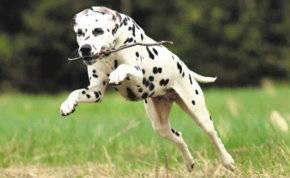 بالصور .. كلب يقدم روحه لينقذ أصدقائه من ثعبان