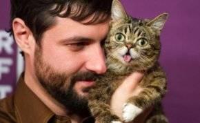 """""""مواء القطط"""".. فوائد صحية لا تخطر على البال"""