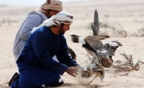"""""""محمية المرزوم"""" تجربة متفرد للصيد بالصقور في أبوظبي (صور)"""