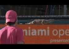 """بالفيديو.. """"سحلية"""" عملاقة تثير الرعب في مباراة تنس!"""