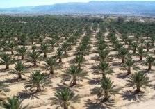 كويتي يستثمر بأراضي العراق ويضخ 58 مليون دولار في مشروع
