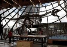 بيع هيكل ديناصور مقابل أكثر من مليوني دولار