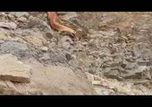 مشهد مرعب.. أفعى ضخمة تتجول في جبال السعودية