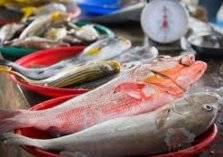 تناول الأسماك الكبيرة تهلك الصحة.. والسبب؟
