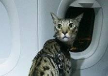 قطة تتسبب بتأخير رحلة طيران في مطار بيروت!