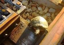 """""""شاهد"""" كيف تحمي قطارات اليابان السلاحف من الموت"""