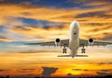 خسائر مليونية لقطاع الطيران في الشرق الأوسط
