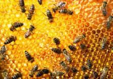 فايروس قاتل يهاجم ممالك النحل