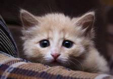 شاهد .. فتاتان تعذبان قطة بلا رحمة!