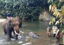 القبض على من تسبب في قتل الفيل وجنينها