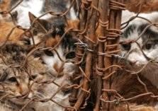 شاهد .. فندق يحبس مئات القطط ليقدمها في وجبات الطعام