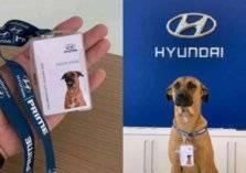 هيونداي توظف كلب مشرد في قسم المبيعات
