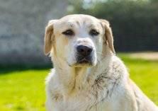 شاهد .. سطو مسلح ينهي حياة كلب شجاع أنقذ صاحبه