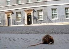 """""""حيوانات خارقة"""" تغزو شوارع لندن!"""