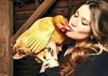 """أمريكا تمنع مواطنيها من """"تقبيل الدجاج""""!"""